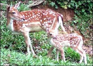 Jawahar Deer Park (Shamirpet)