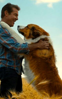 A Dogs Journey (english) reviews