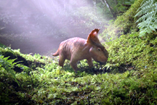 Walking With Dinosaurs (3D)