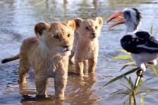 The Lion King (Telugu)